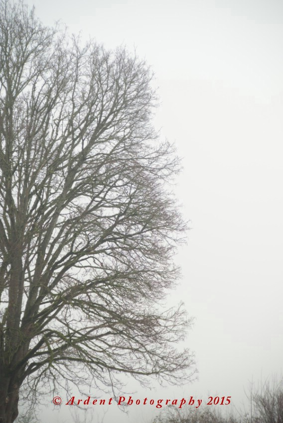 Fog and Tree Photograph