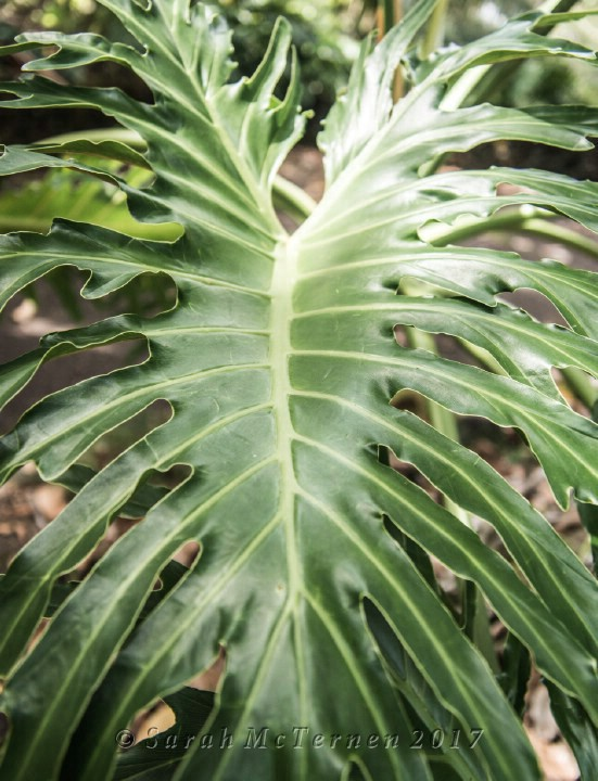 Tropical Foliage Photograph