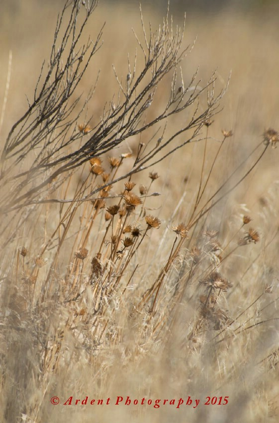 Prairie Grass Photography by Sarah McTernen