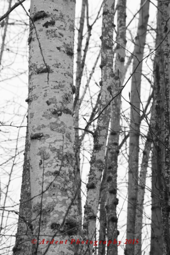 Birch Photography by Sarah McTernen