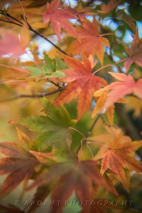Fall Colors Photograph